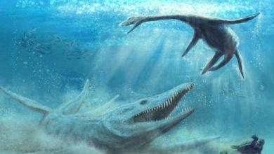 Photo of 波蘭發現海怪化石 1.5億年前侏羅紀的海洋霸主「上龍」