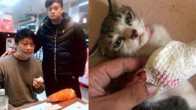Photo of 新竹虐貓狠男傳遭私刑、喊再也不碰毛小孩 動保志工決定這樣做