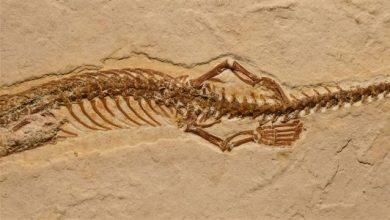 Photo of 考古發現「古蛇有腳」 證明聖經記載「蛇被上帝詛咒用肚子行走」