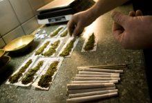 Photo of 增加精神病風險!朱武獻:大麻有成癮性,就是毒品,不應該除罪!