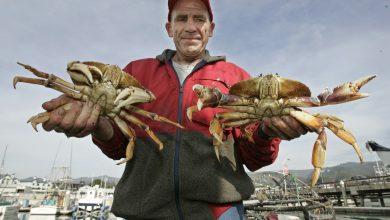 Photo of 暖化使海水變酸  研究:螃蟹器官受損、外殼溶解、發育遲緩