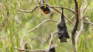 Photo of 面對野生動物作好自身防護 專家籲「不接觸、不餵食、不撿拾」