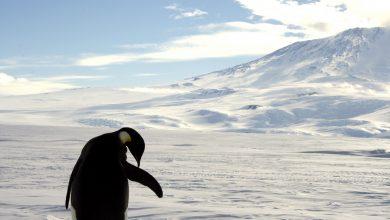 Photo of 比台灣還熱!南極2月氣溫「破20℃」 科學家憂「企鵝末日」