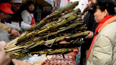 Photo of 蝗蟲大軍恐襲中國大陸 陸吃貨網友:在飛的不是蝗蟲,是人民幣!