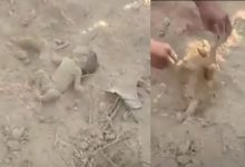 Photo of 印度村民土裡發現「一隻腳」 挖開竟是新生男嬰
