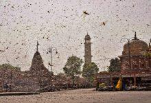 Photo of 驚悚!蝗蟲舖天蓋地襲擊印度 目擊者:根本看不到天空
